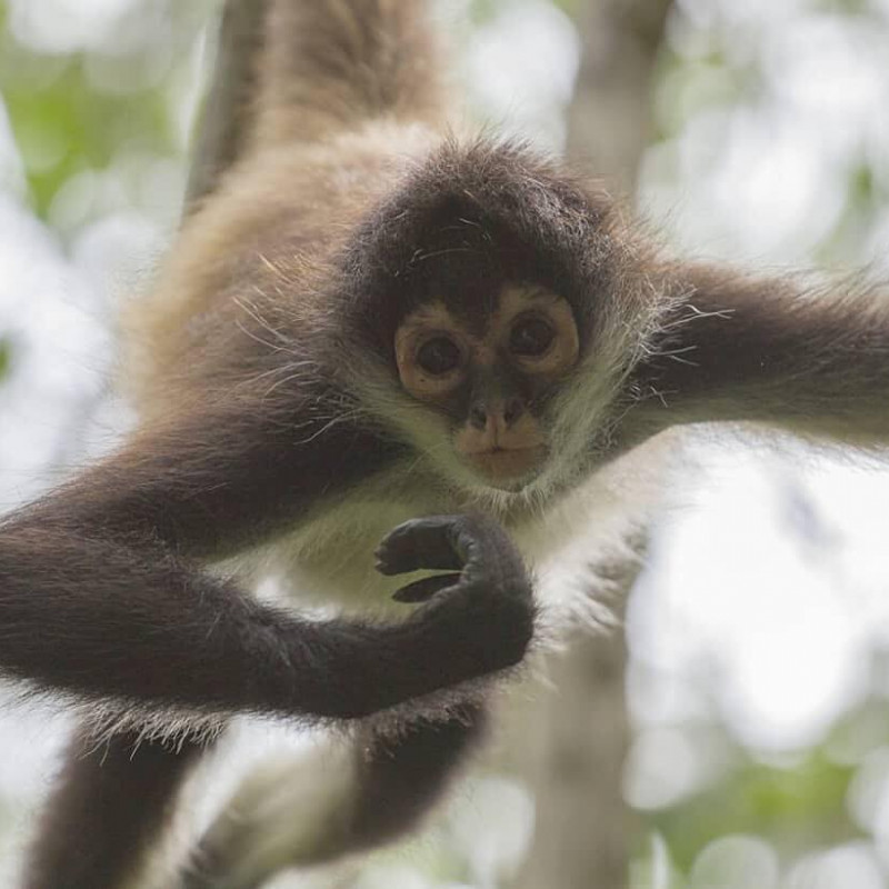 Monkey_at_Sandos_Caracol_Photo_by_.texjames.photography.jpg